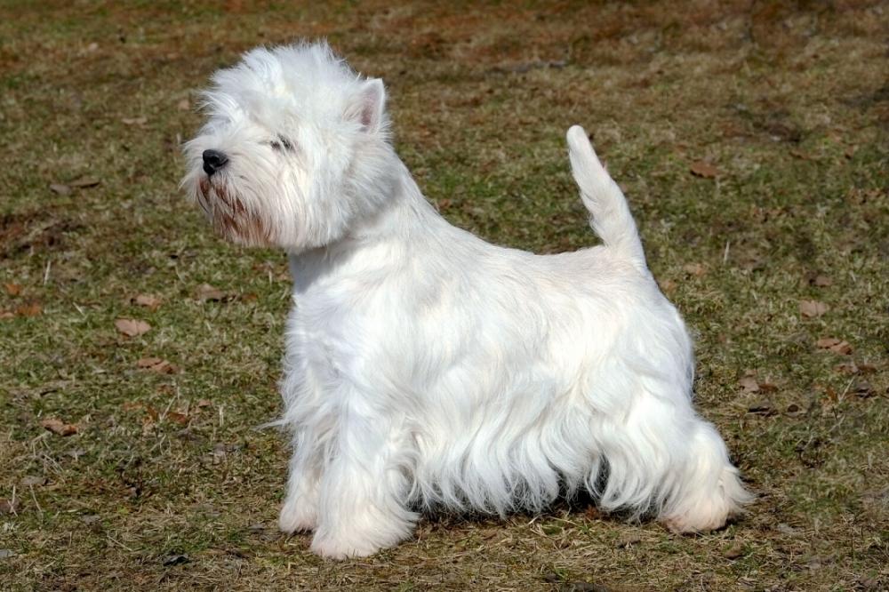 Westík je pes se smyslem pro humor!