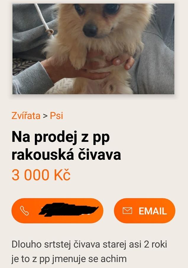 Koupím psa a ne jen tak ledajakého...