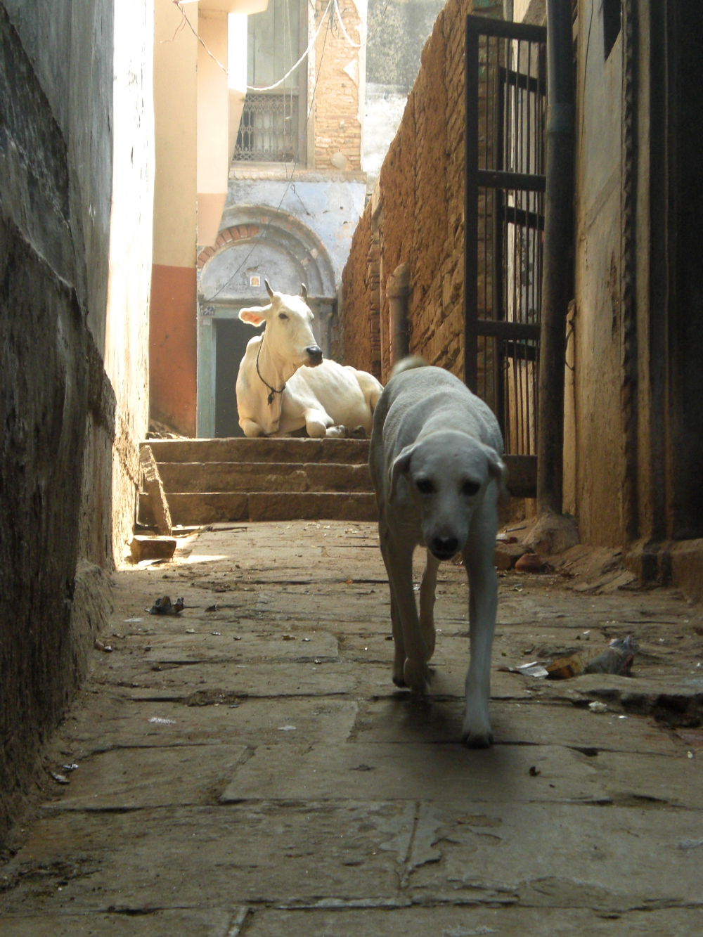 Mít po svém boku psa není samozřejmostí!