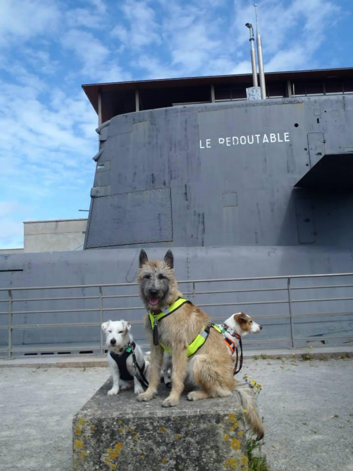 U laekenois jsme taková jedna velká psí rodina!