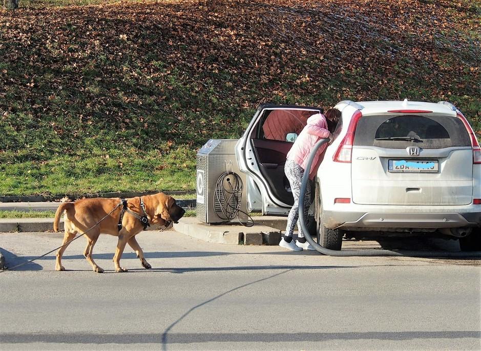 Základní vzory chování psa na trailu 8. díl