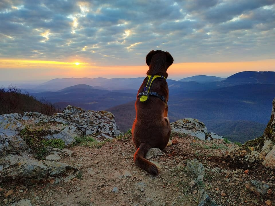 Dog & sunrise – corona challenge 2020