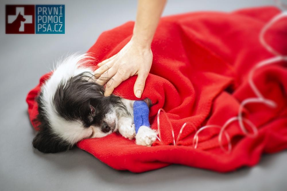 Lidské léky mohou psa ohrozit na životě!