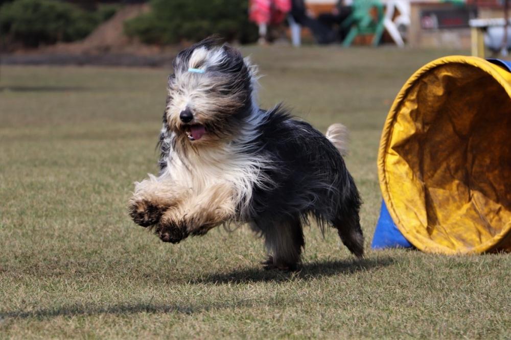 Agility je pro mě synonymem souhry člověka a psa!