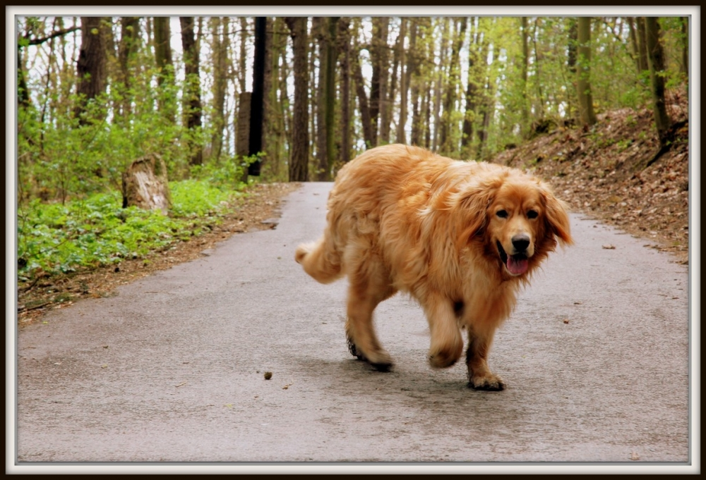 Andy je pes, který se mi vryl hluboko do srdce!