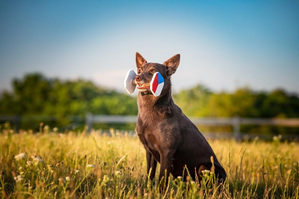 Prvního psa jsem si pořídila na protest všem!