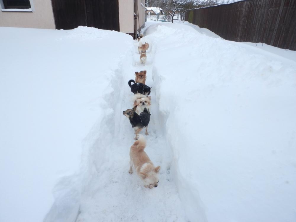 Malý velký pes…