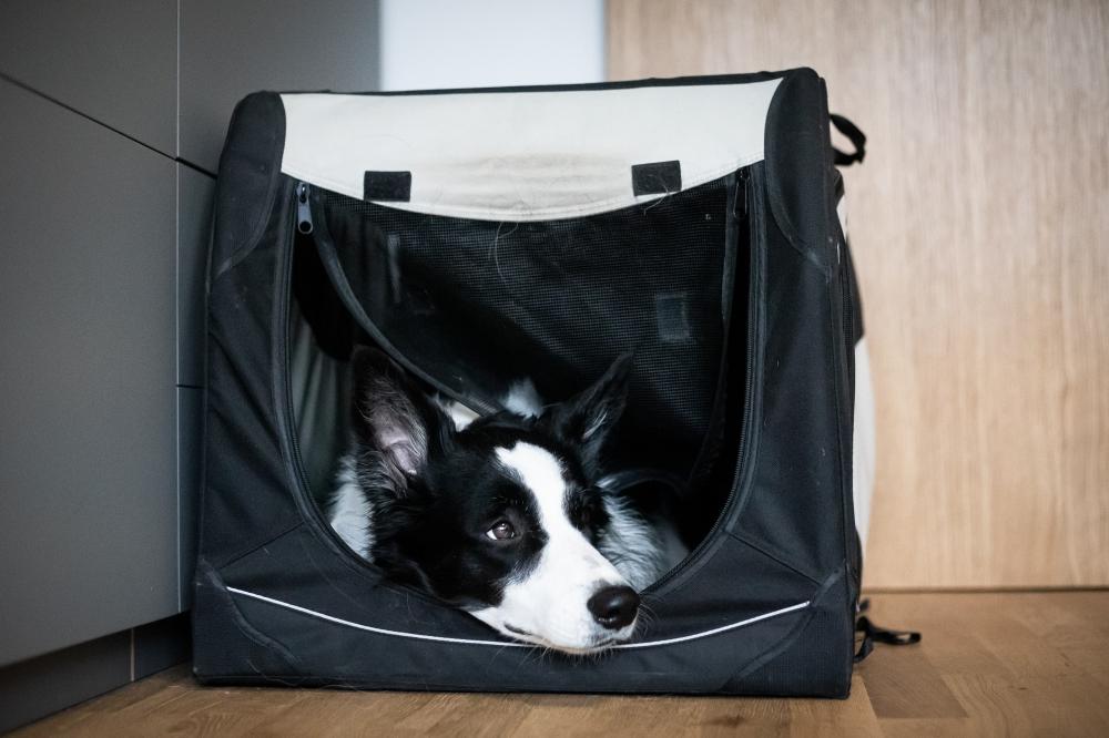 Separační úzkost u psa: jak ji řešit II. díl