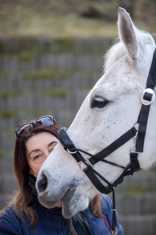 Spojení kůň a pes funguje po celém světě!
