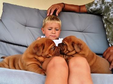 Milí psi s lidským výrazem to – jsou bordeauxské dogy!