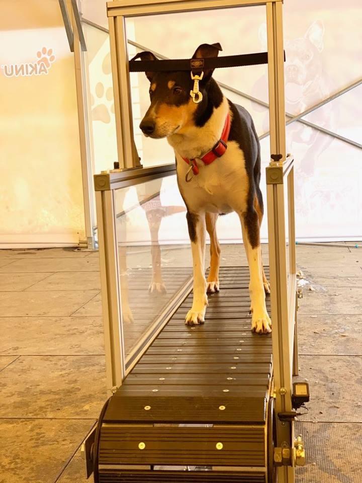 Pesopark nově nabízí unikátní treadmill pro zabavení vašich psů