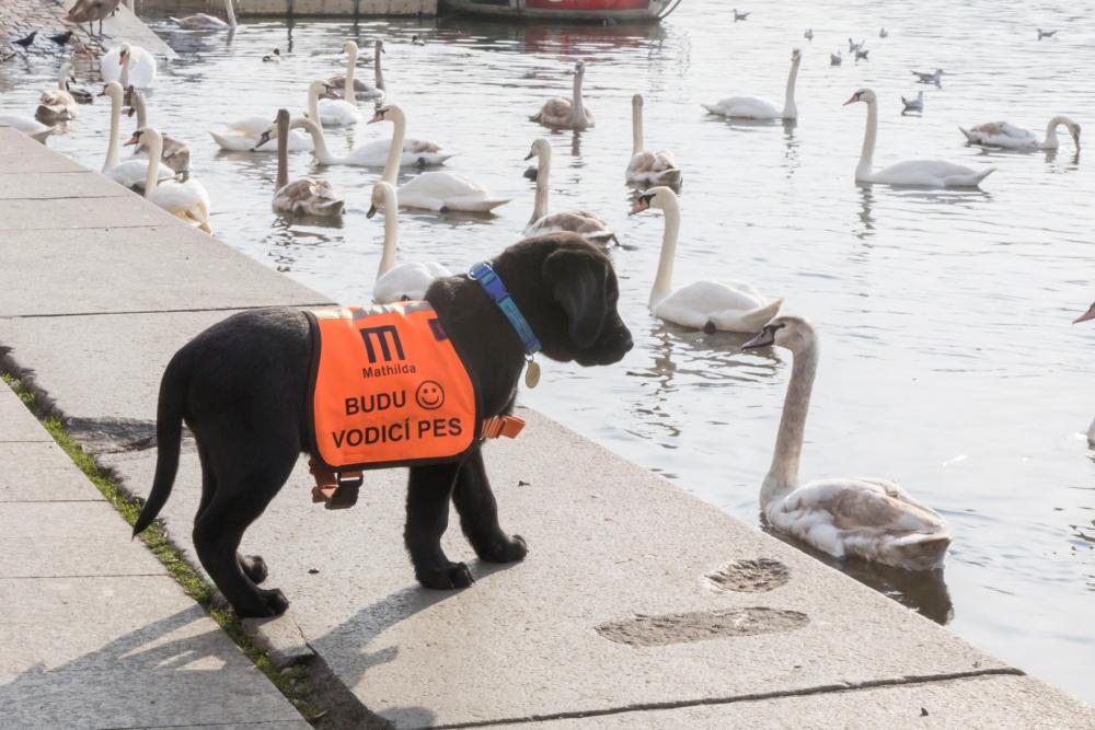 Vodící psi ke mně patří skoro celý život!  2. díl