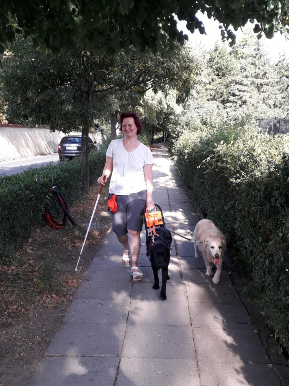 Vodící psi ke mně patří skoro celý život!  1. díl