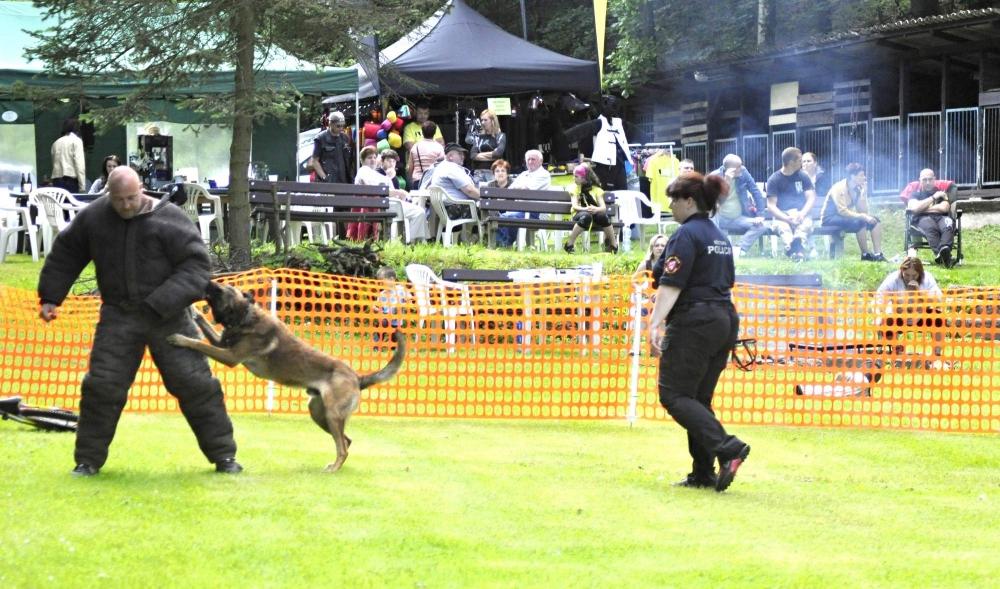 Psi městské policie si změřili své síly v Liberci...