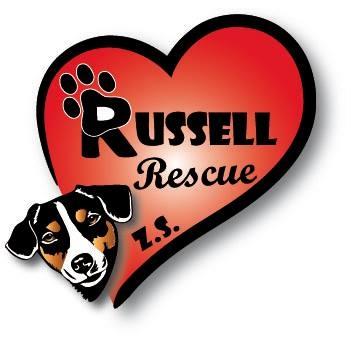 Majsterka Europy a Slovenska pochádza z útulku Russell Rescue!