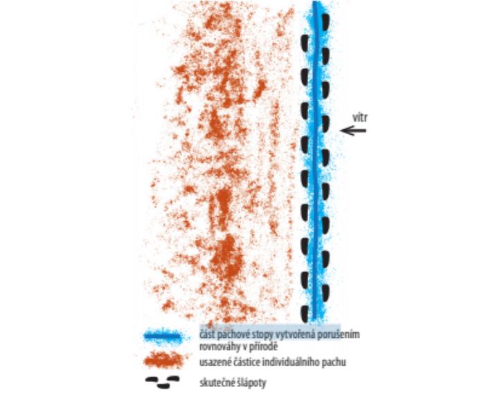 Mantrailing – pohyb pachových částic v prostoru 16. díl