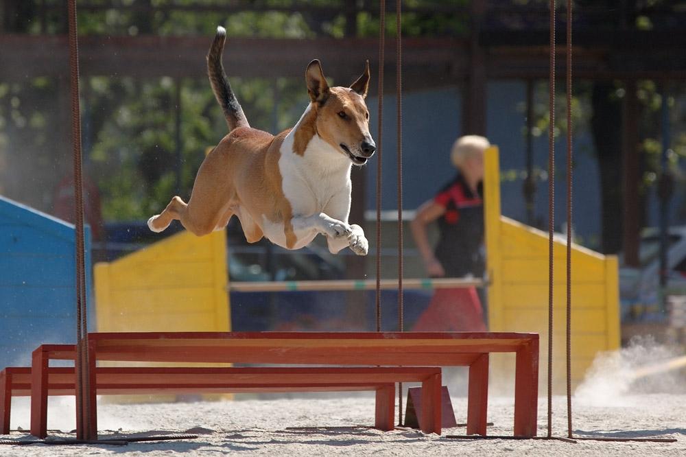 Hledala jsem parťáka na agility! A našla!