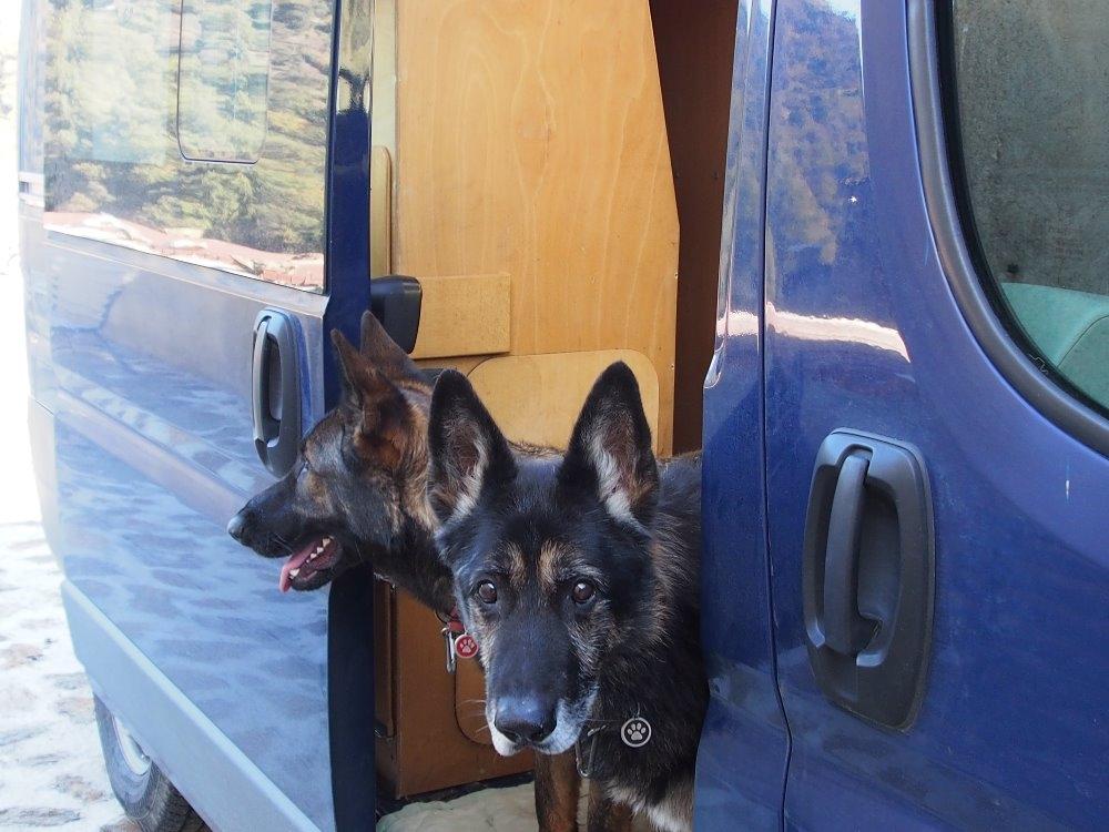 Dejme na instinkty našich psů...