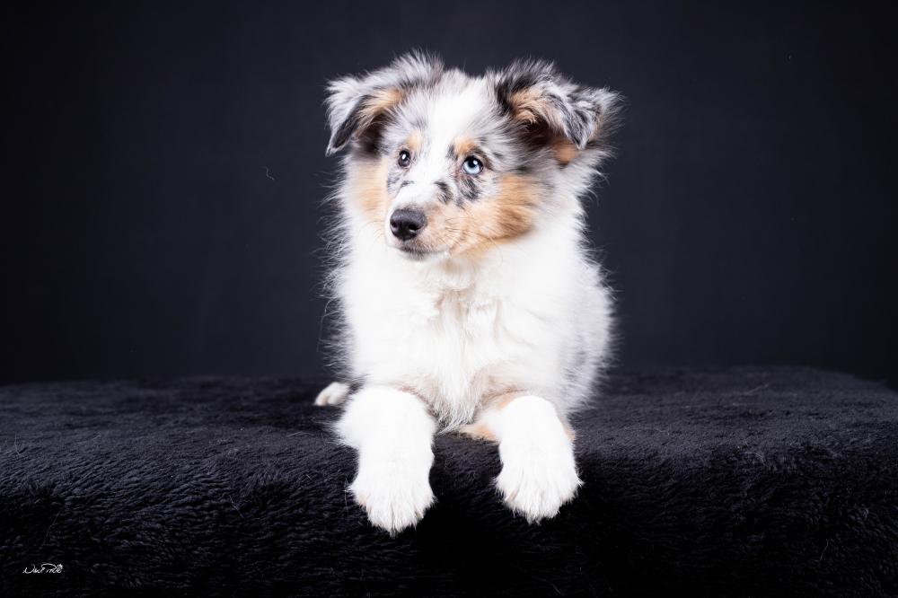 Jaké hlavní změny přináší novela zákona na ochranu zvířat pro chovatele psů a koček?