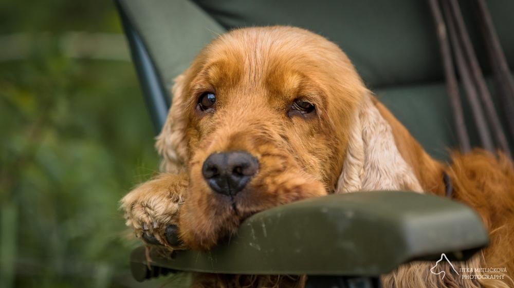 Jak často odčervovat psa?