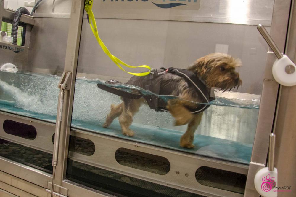 Aquaterapie pro psy
