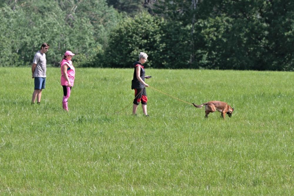 Stopařská poradna – Psa zajímá víc stopa než pamlsky!
