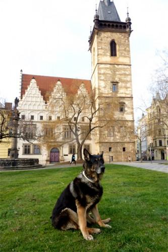 Může mít něco společného významný český král a bezvýznamný český pes?
