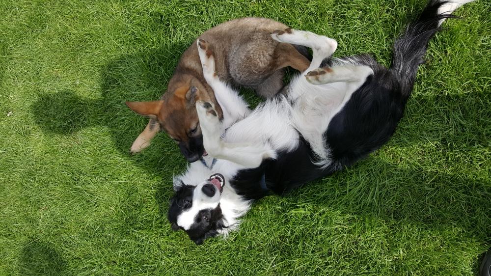 Nesocializujte svého psa aneb socializace naruby!