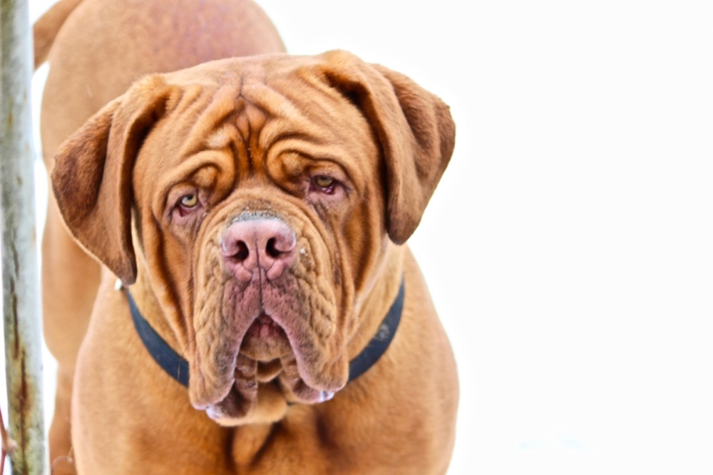 Hoď své srdce za překážku, tvůj pes tam pak skočí za ním!