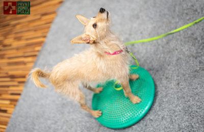 Poradna fyzioterapie – Jak si poradit při psím fitness s neposedou?