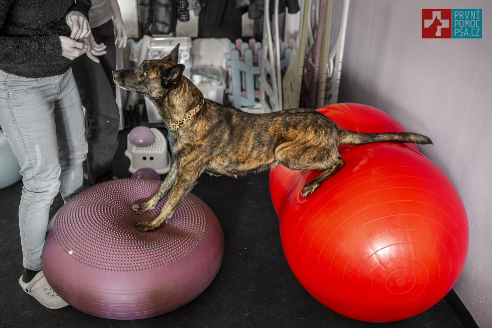 Domácí psí fitness - Balanční pomůcky pro psy