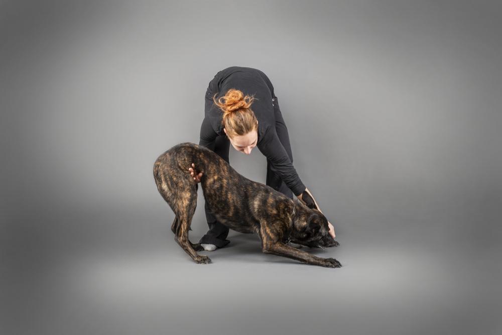 Domácí psí fitness – pokročilé cviky na balónech