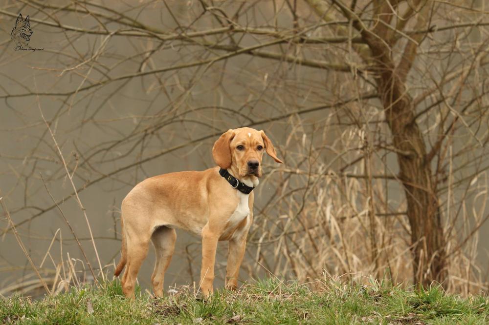 Deset otázek pro budoucího majitele psa