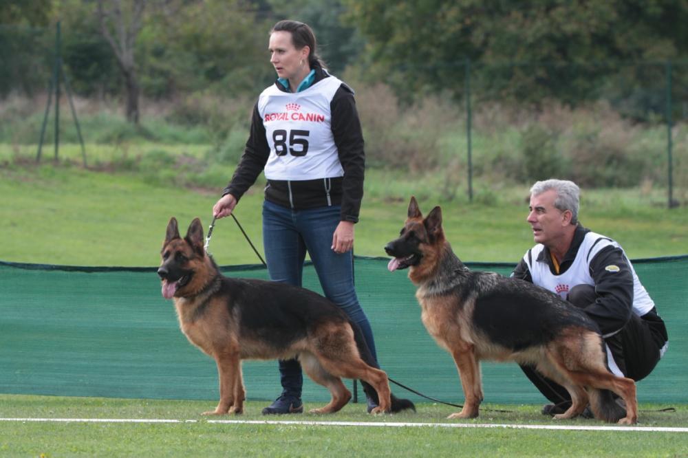 Hlavní speciální výstava německých ovčáků 18. - 19. 9. 2021 Beckov (SK)