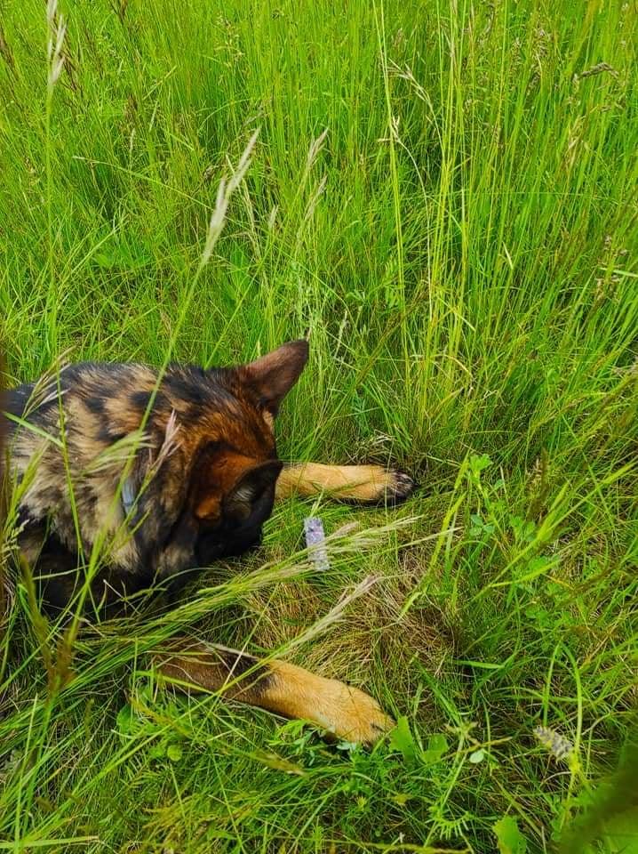 Stopařská poradna – Můžu psovi zakopat do stopy maso?