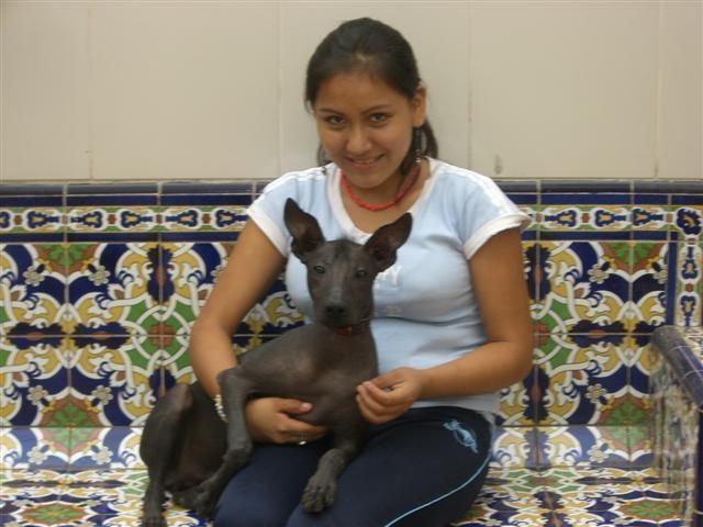 Peruánský naháč je sportovec, hlídač i společník!
