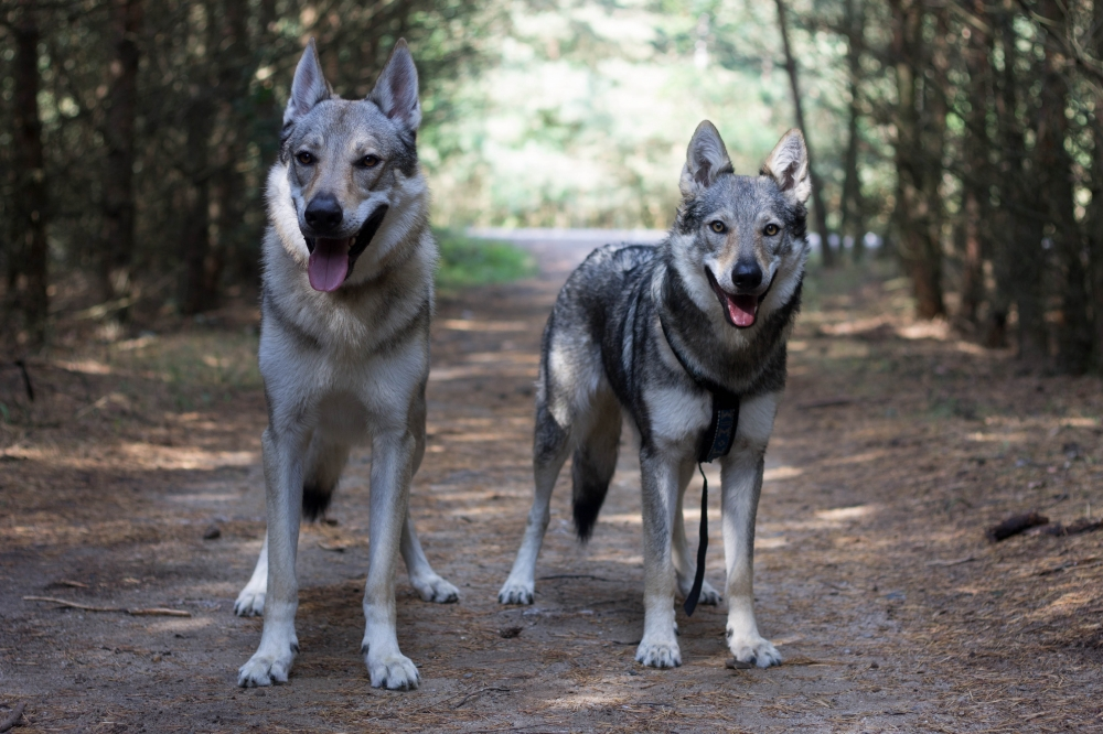 My o vlku a on za humny...