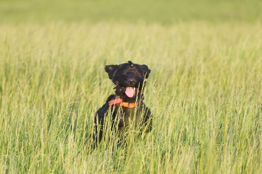 Knírač je nejlepší pes na světě!