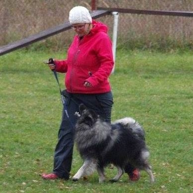 Hlavní je mít se psem vztah!