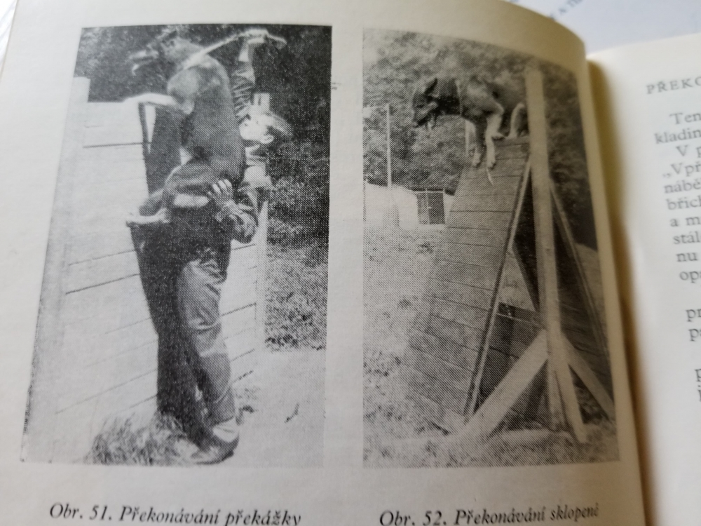 Další perla z minulosti – Výchova a výcvik psa...