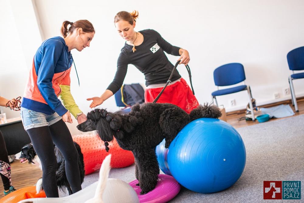 Domácí psí fitness – pokročilé cviky na balónech II. kombinace balančních pomůcek