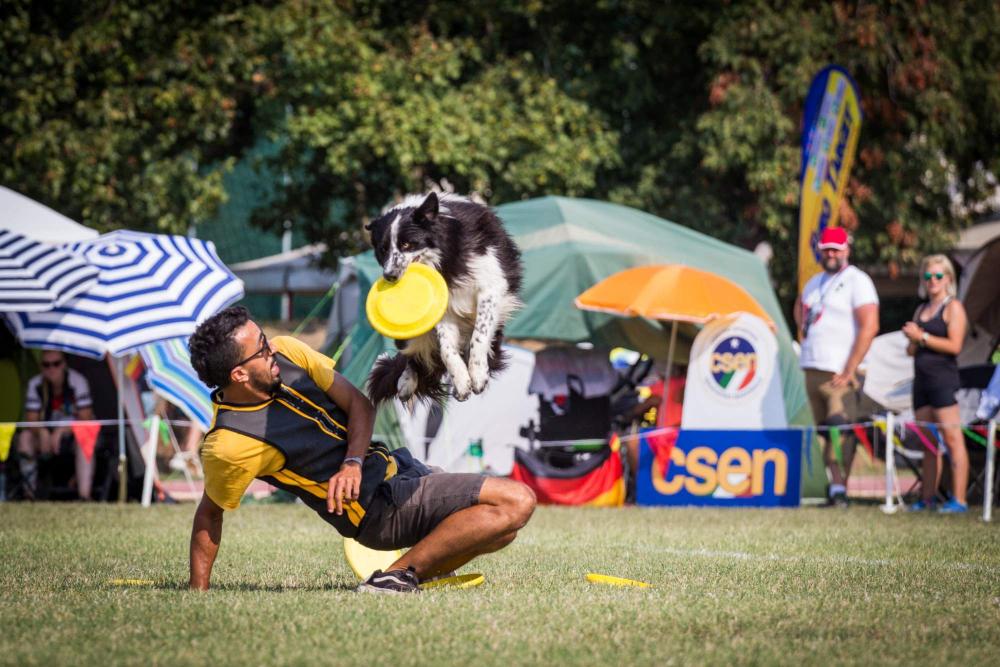 Freestylová pravidla v dogfrisbee II. – 4. díl
