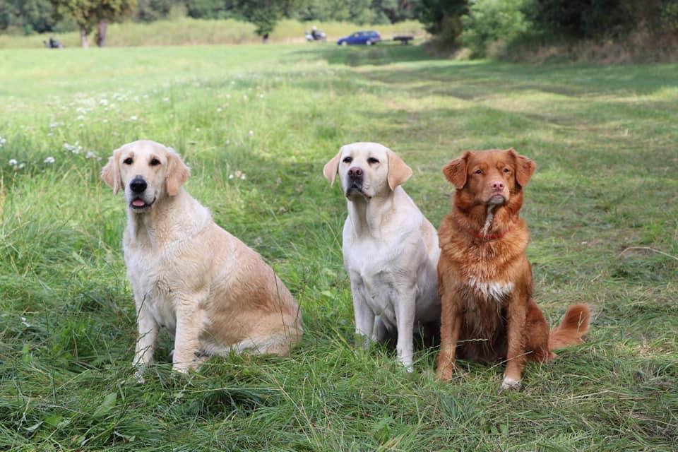 Toller je víc než jen skvělý lovecký pes!