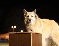 Testujeme za vás... aneb Výukový program ATA - Trenér psů I. stupeň
