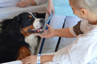 Vyhlášení výsledků ankety Statečné psí srdce 2020