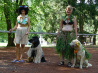 CARNIVAL online DOG PARTY