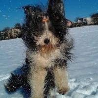 Pre mňa je môj pes najkrajší na svete!