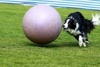 Treibball – bilancujeme a hledíme do budoucna!