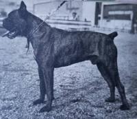 Proč zbytečně uhynuli zdraví chovní psi?