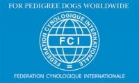 Pro psy na celém světě…